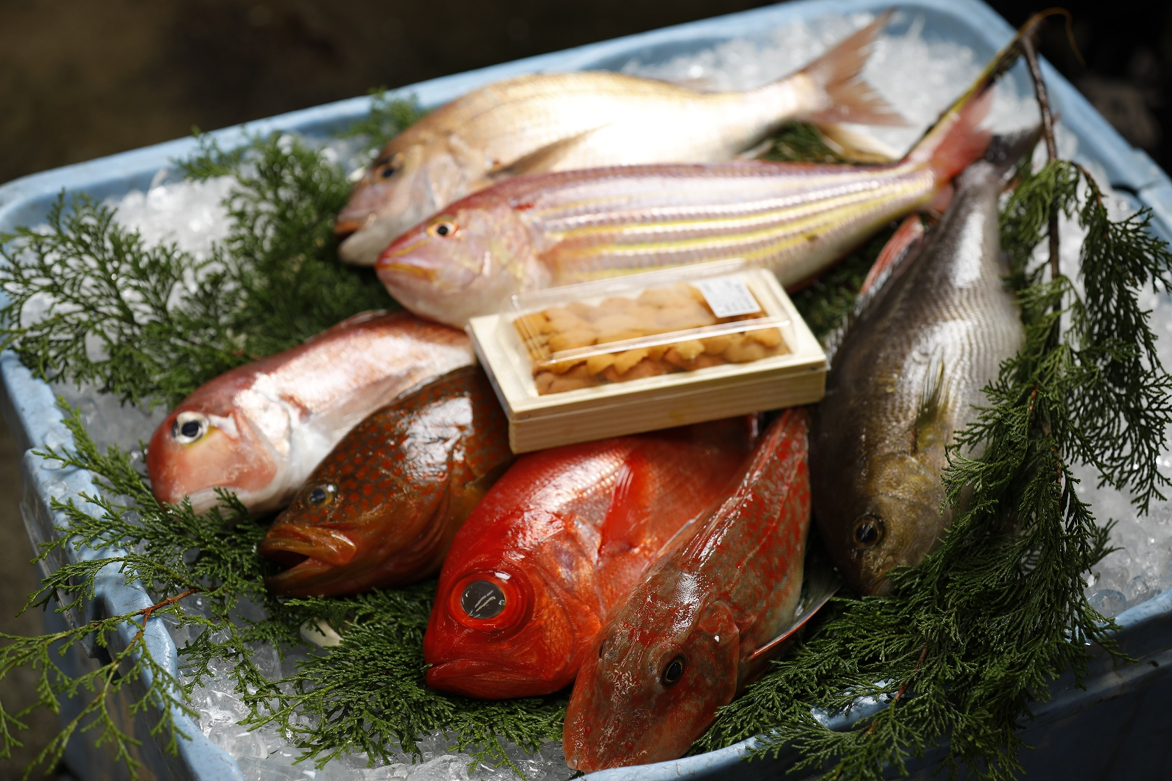 京都市中央市場「おうちdeおさかなマルシェ」